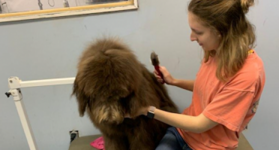 Senior and volunteer Maddie Wymer from the Highland Adventist School grooms a dog at Fancy Paws.